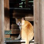 A neutered cat