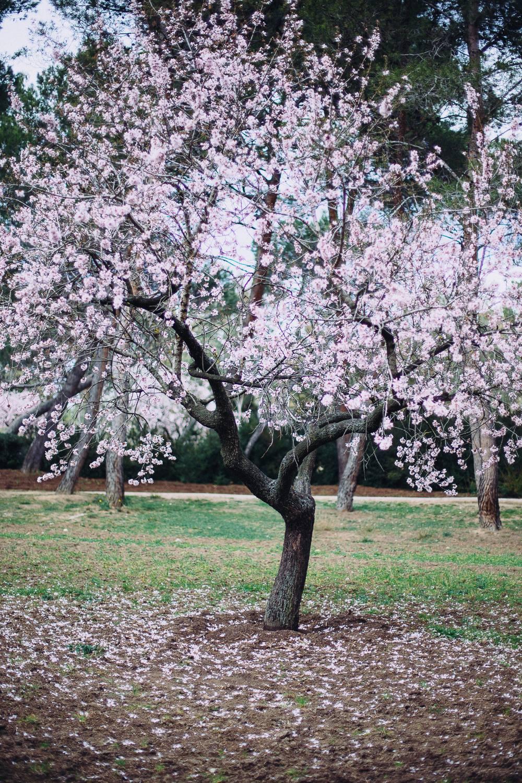 Madrid Now In Full Bloom Hurry Parque Quinta De Los Molinos