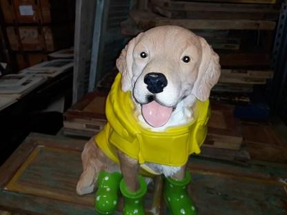 Hond-in-regenpak-4