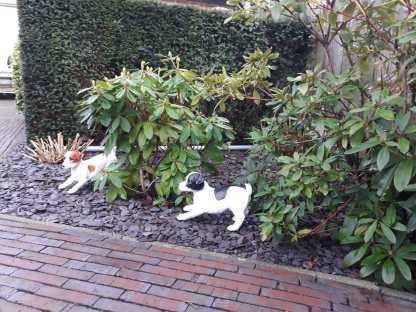 wakende jack russel tuinbeeld bruin wit zwart