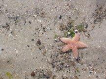 Sand und Seestern