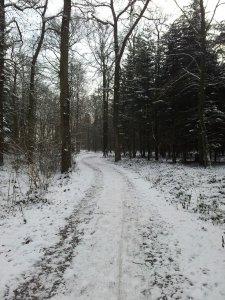 Durch den Wald zur AWO