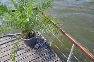 Palmen an Bord