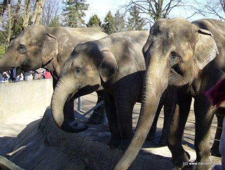 Die Elefanten