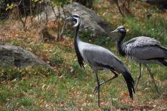 Schöne Vögel entdecken