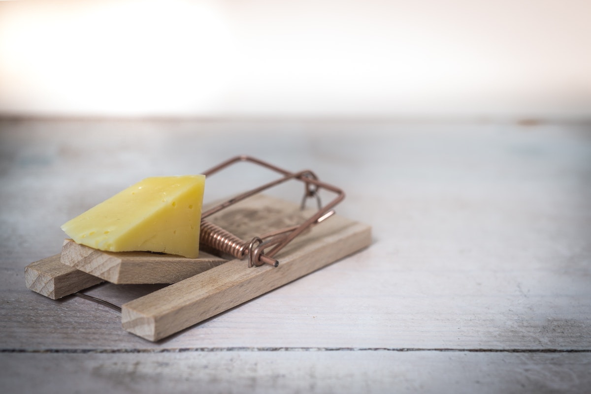 cheese on a mousetrap
