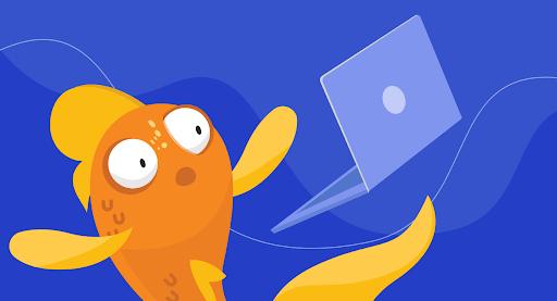 goldfish throwing laptop