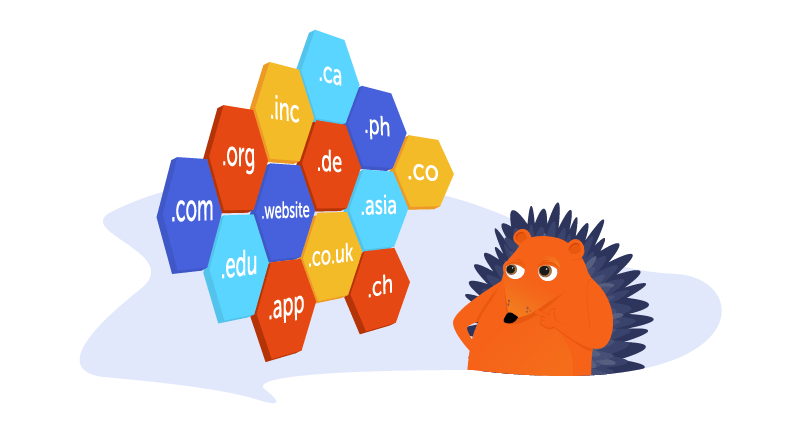 Hedgehog looking at different domain name extensions