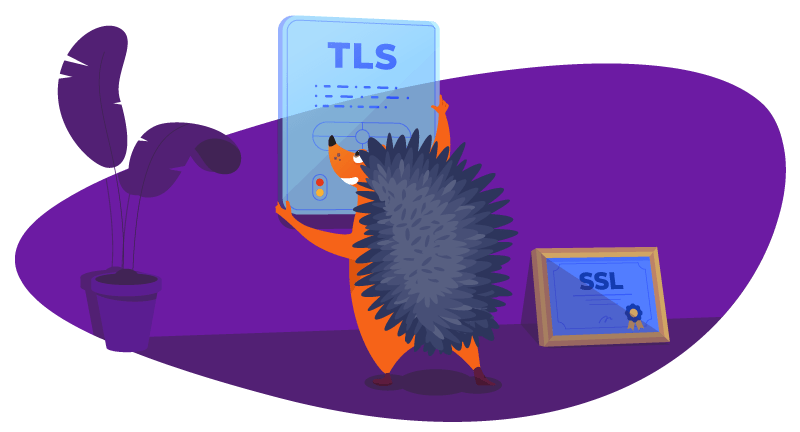 Hedgehog learning about TLS