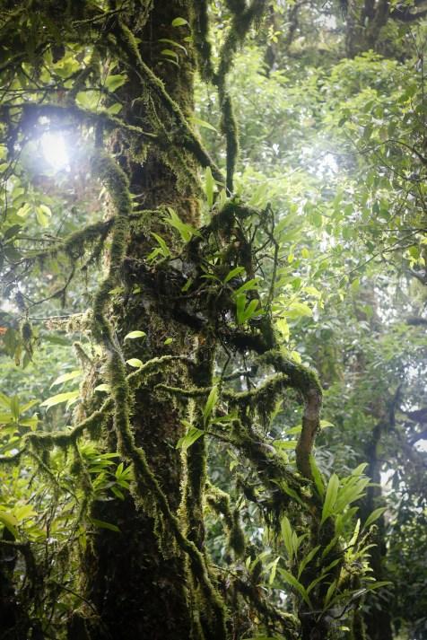laos-cloud-forest-nature
