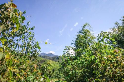 Phou Louey mountain
