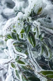 Houphan-NamEt-PhouLouey-cold-january-2016-2