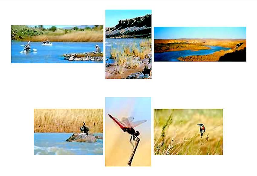 Fleuve Orange en Namibie