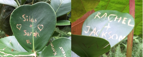 leaf names - leaves
