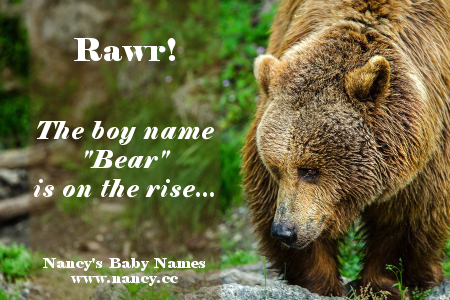 bear, baby name, boy name