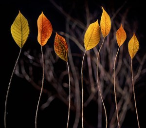 Standing Leaves, Curtis Hildebrand Photography