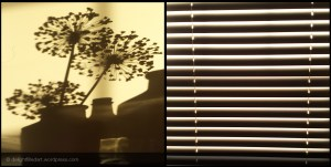 shadow of plants and blinds
