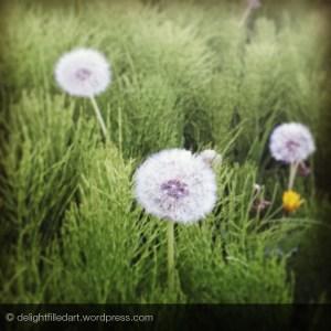 09 dandelions