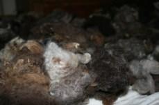 washing_wool_fleece-8441