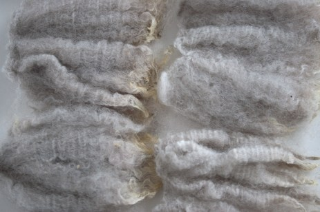 raw-fleece-NewZealand-Polwarth-8831