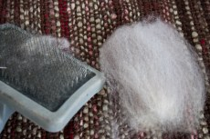 raw-fleece-NewZealand-Polwarth-8839