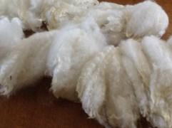 NewZealand Merino Wool (26)