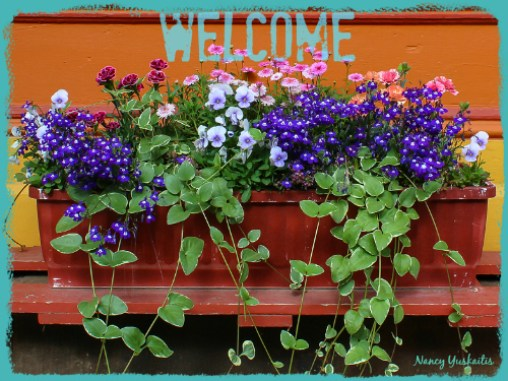 Flower Box-NY-500 Welcome