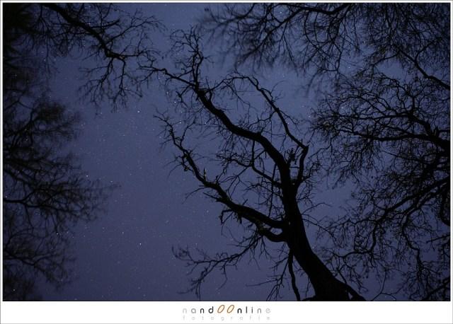 Maanlicht in het donkere bos