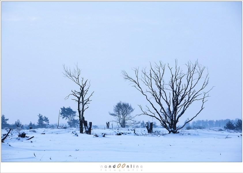 Een sneeuwlandschap zal altijd een verkeerde belichting aangeven. Daarom moet je overbelichten in dit soort situaties.