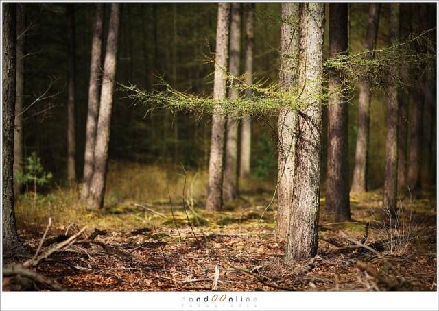 Zonlicht in het bos