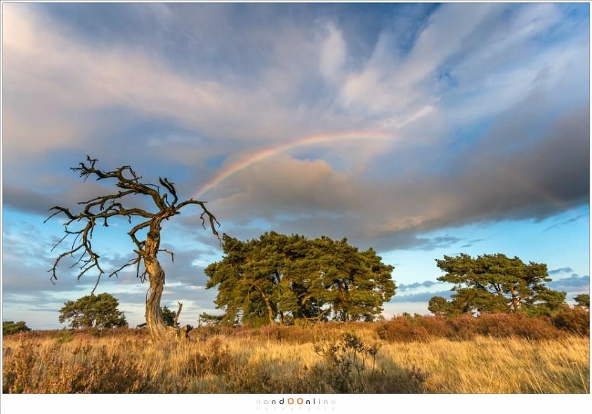 De regenboog (NH007365)