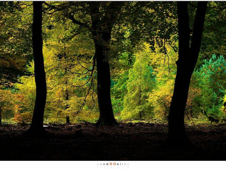 De kleuren van de herfst worden het beste zichtbaar als het vanuit de duisternis van het bos gezien wordt. (ISO400, f/4,5, -2EV, 1/400 115mm brandpunt)