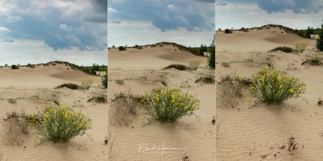 Hoe breng je een voor- en achtergrond goed in beeld? Door de plaatsing van het onderwerp in beeld, laag midden hoog