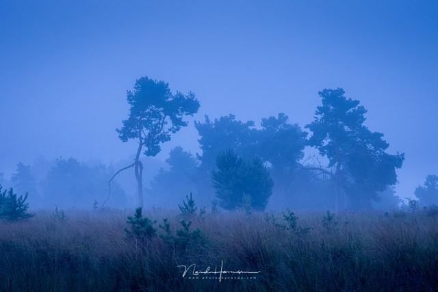 blauwe uurtje aan het Kiezelven