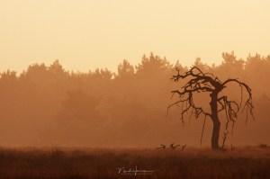 De eerste foto van de Tim Burton boom