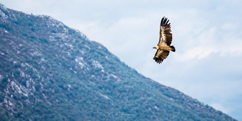 vogelfotografie door Nando