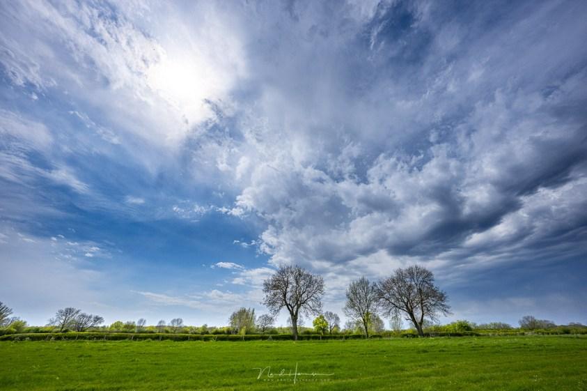 Het Nederlandse landschap in de lente