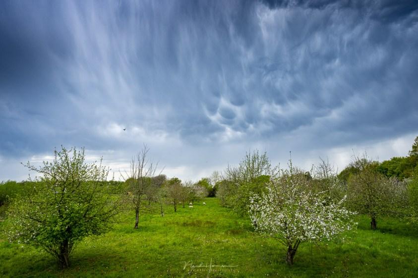 Een bui tussendoor met de bloesem in de bomen