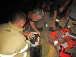 New Albany MS. Dog hero of Barksdale Dr. fire