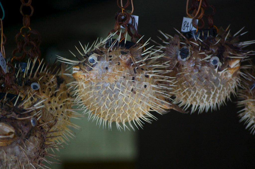 Mrs. Puff's Husband - puffer fish gift