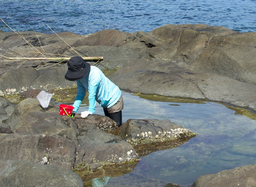 Woman collecting crabs in a rockpool