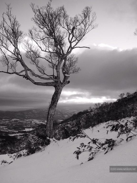 2003 Niseko - low snow and a tree in black and white