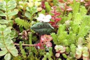Make a Miniature Garden
