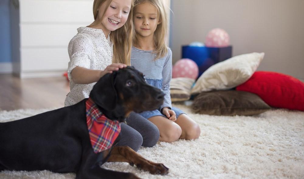 Τα παιδιά θέλουν κατοικίδιο: τι να κάνετε