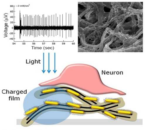 Carbon nanotube-semiconductor nanocrystals film for light stimulation of the retina