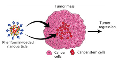 Phenformin-loaded nanoparticles kill both cancer cells and cancer stem cells