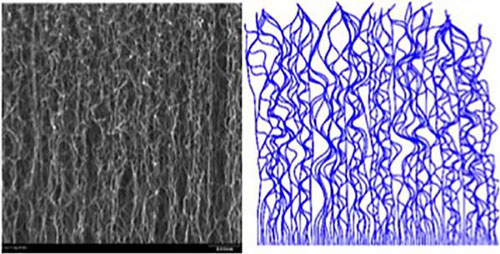Carbon Nanotube Forest
