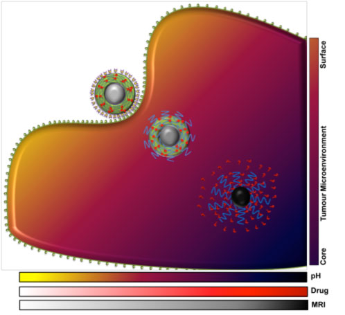 MRI visual order-disorder nanostructure for cancer nanomedicine