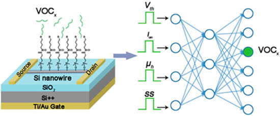 Scheme of a molecularly modified SiNW FET sensor