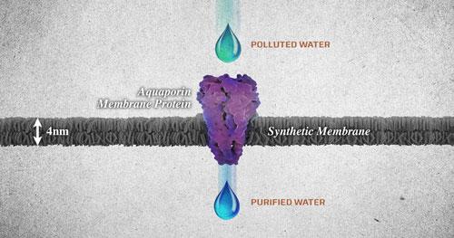 Aquaporin-embedded biomimetic membrane